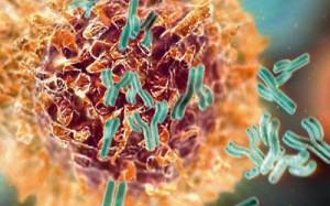 Иммунитет против рака
