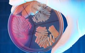 Кишечную палочку научили производить антибиотики