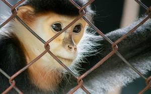 Экспериментальная вакцина защитила обезьян от вируса, сходного с ВИЧ