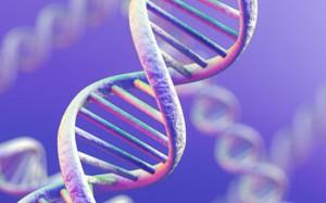 Исследователи обнаружили гены, вызывающие не только ожирение, но и шизофрению