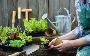 Весна и лето в саду и на огороде