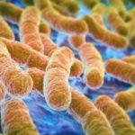 Найдены манипулирующие мозгом бактерии