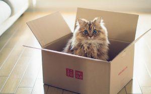 Как приучить кошку к новому жилью