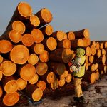 Голландские ученые разработали ДНК-тест для определения незаконно вырубленных деревьев