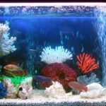 Ремонт аквариума легко и быстро. Основные неисправности в аквариуме.