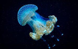 Итальянские пляжи атаковали ядовитые медузы