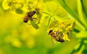 В Австрии садовода отправили за решетку за убийство пчел