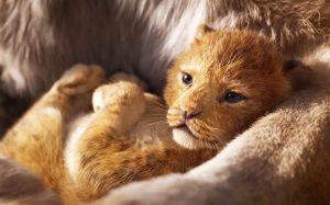 В Кении организовали туры по местам, знакомым по мультфильму «Король Лев»