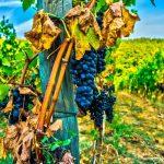 Названа лучшая страна для любителей вина. Французы в шоке!