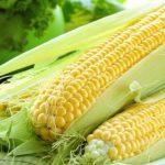 Порядок выбора кукурузы для посева