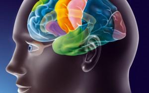 Открытие: зрительная кора мозга способна принимать решения