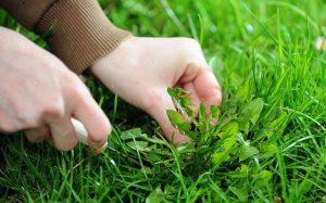 Избавление от сорняков – несколько действенных методов