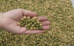 Приобретение семенной картошки лучших сортов на Украине через интернет-магазин