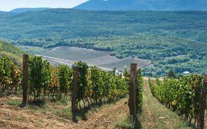 Крым признан лучшим регионом России для осеннего винного туризма