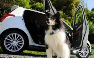 Что нужно знать и учитывать для правильной перевозки собаки в автомобиле