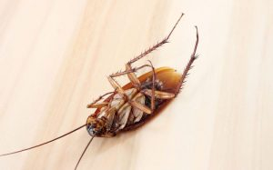 Уничтожение тараканов в Туапсе