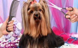 Качественные стрижки собак и кошек в салоне красоты «Лайкин»