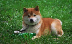 Породы собак с фото и названием на doge.ru