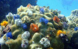 Большой Барьерный риф потерял половину своих кораллов