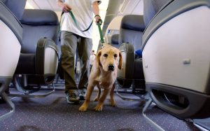 S7 увеличивает число животных, которых допустимо провозить в салоне самолета