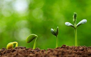 Какой выбрать регулятор роста растений?