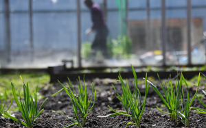 Экспертизу пестицидов и агрохимикатов сократят