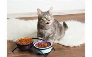 Какой корм выбрать для кота?