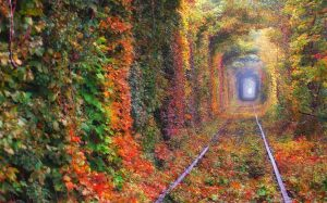 Магия природы манит? Тоннель любви в Украине – романтическое место для влюблённых.