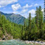 В 14 российских регионах стало больше лесов